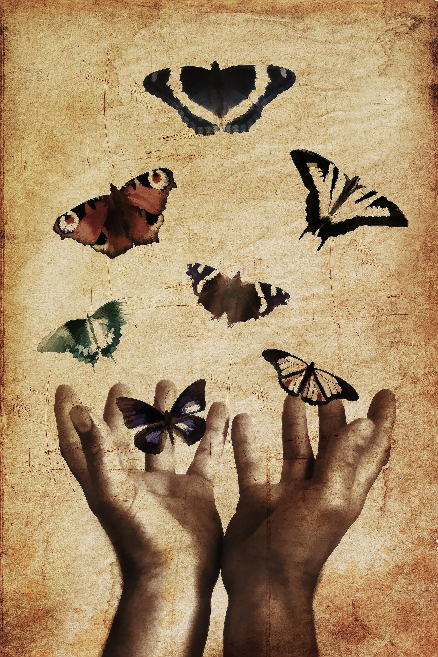 butterfly-hands.jpg